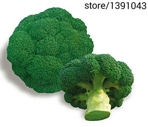 Portal Cool Ding Vert Broccoli Plantation 100Seed PotagÚres Semences Spring Garden Accueil Biologique