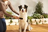 Hunde Pflegeset 6-Teilig