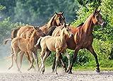 Puzzle 260 Teile - Pferde - Araber Pferd / Foto Motiv - Pferdefamilie / Pferdemotiv - Rennpferde im Galopp - für Mädchen & Jungen - Haustiere / Stute Hengst Fohlen