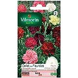 Vilmorin - Sachet graines Oeillet des fleuristes Triomphe Varié