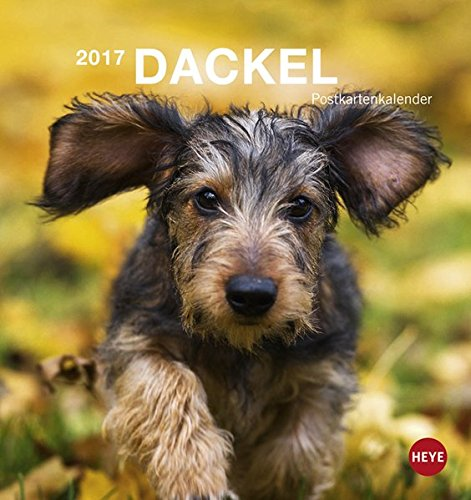 Dackel 2017 Postkartenkalender
