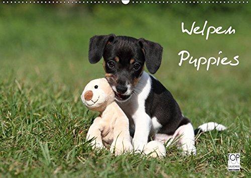 Welpen - Puppies (Wandkalender 2019 DIN A2 quer): Wandkalender (Monatskalender, 14 Seiten ) (CALVENDO Tiere)