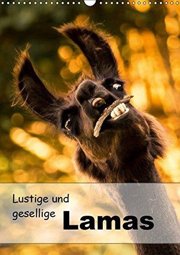 Lustige und gesellige Lamas 2019 (Wandkalender 2019 DIN A3 hoch): Liebevoll gestaltete Lama Fotografien. (Geburtstagskalender, 14 Seiten ) (CALVENDO Tiere)