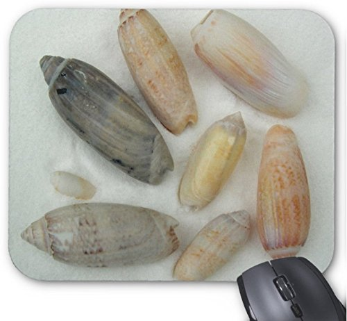 Gaming Mouse Pad Beschriftet Olive Tropical Seashell Fotografie Design für Desktop und Laptop 1 Packung 25x20cm / 9.8x7.9in Olive Pad