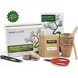 Kit de Bonsái – Haga crecer su propio Bonsái a partir de semillas