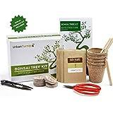 Kit Arbre de Bonsaï Faites grandir votre propre arbre Bonsaï à partir de graines - Cet ensemble cadeau comprend 5 variétés d'arbres à planter - Croissance en intérieur en suivant les instructions étape par étape incluses