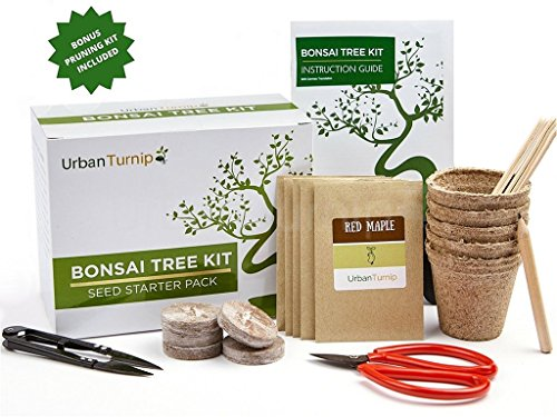bonsai-tree-kit-grow-your-own-bonsai-trees-from-seeds-gardening-gift-set-includes-5-tree-species-to-