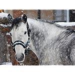 Meister Comfort Headcollar for Nobility, Travel, Stable Horse Headcollar Halter 11