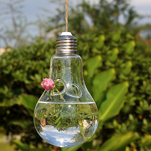 Fenghong Hängende Vasen Zwiebelform Glasschalen Haning Hydroponic -