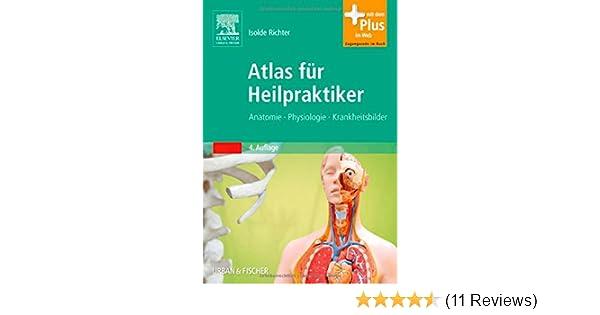 Groß Wie Zu Meistern Anatomie Und Physiologie Bilder - Anatomie Von ...