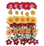 Gepresste Blumen gemischt, Narzissen, Lerchensporn, Margerite, Nelke, Hortensie, Spitze Blumen, Chrysantheme, Laub