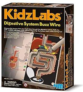 4M- Digestive System Buzz Wire Ciencia (00-03386)
