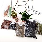 en forme de larme pour terrarium Avec kit de terrarium, Plante/S, outils et Step by Step Guide/emballés en Angleterre Mega Cuivre clair