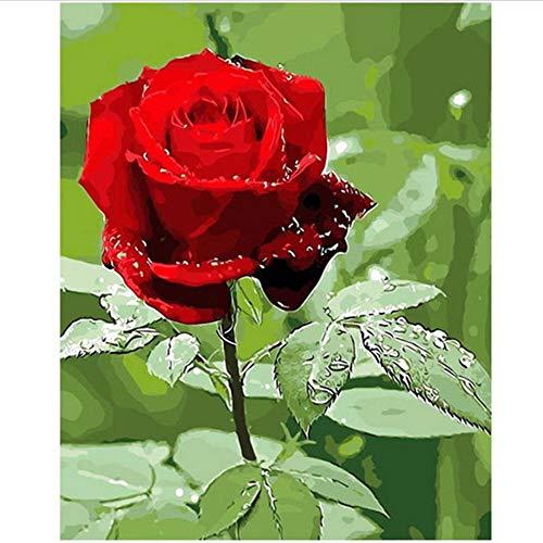Waofe Einzigartige Rose-Diy Farbe Nach Anzahl Kits Für Erwachsene, Malen Nach Zahlen Auf Leinwand, Acrylfarbe, Wandkunst Bild 16X20 Zoll, 40X50 Cm, Mit Rahmen