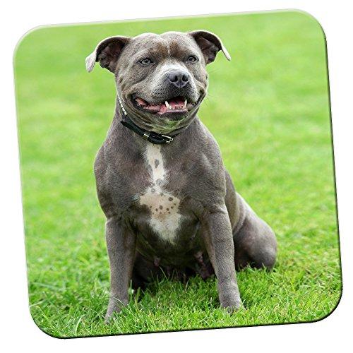Staffordshire Bull terrier Staffy/confezione di sottobicchieri staff Dog, Acrilico, Grey Staff In Park, 2 x Coaster