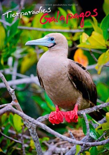 Tierparadies Galapagos (Posterbuch DIN A3 hoch): Der Archipel der Vögel (Posterbuch, 14 Seiten)