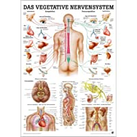 ruediger Anatomía mipo 46lam vegetatives Sistema Nervioso Pizarra, 24cm x 34cm, laminado
