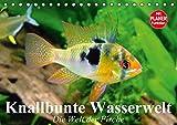 Knallbunte Wasserwelt. Die Welt der Fische (Tischkalender 2016 DIN A5 quer): Die bunte Welt der Fische und Wasserbewohner (Geburtstagskalender, 14 Seiten ) (CALVENDO Tiere)