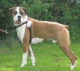 Walk Your Dog With Love Hundegeschirr, gegen Ziehen, Leinenbefestigung vorne