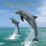 Wale und Delfine 2018: Broschürenkalender mit Ferienterminen. Tierkalender von Fischen. 30 x 30 cm - Korsch Verlag