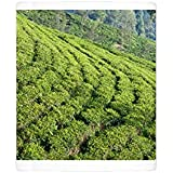 Photo Mug of Terraced fields on a Ceylon tea plantation, Dickoya, Hill Country, Sri Lanka