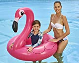 Anello da piscina Jumbo Flamingo