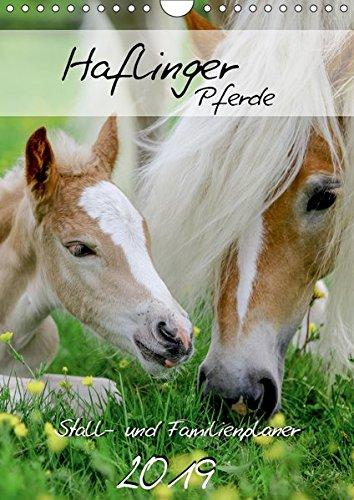 Haflinger Pferde - Stall- und Familienplaner 2019 (Wandkalender 2019 DIN A4 hoch): Stallplaner und Familienplaner - alle Termine im Blick mit ... (Familienplaner, 14 Seiten ) (CALVENDO Tiere)