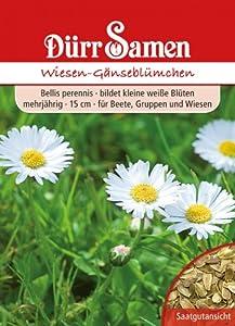 Wiesen-Gänseblümchen von Dürr-Samen - Du und dein Garten