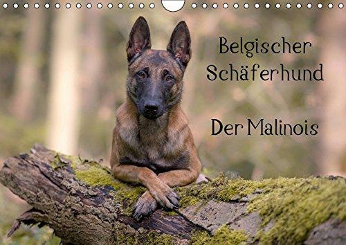 Belgischer Schäferhund - Der Malinois (Wandkalender 2019 DIN A4 quer): Die Facetten einer Hunderasse (Monatskalender, 14 Seiten ) (CALVENDO Tiere)