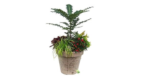 Kübelpflanzen Set immergrün, winterhart für Pflanzkübel Ø 35-60 cm ...