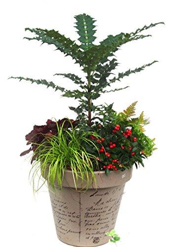 kbelpflanzen-set-immergrn-winterhart-fr-pflanzkbel-35-60-cm