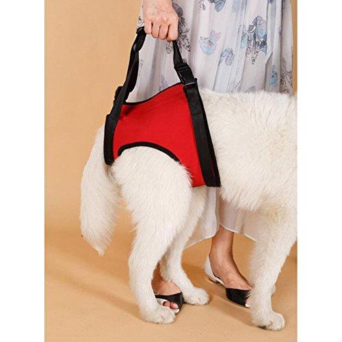 Hunde Lift Harness Hunde Lift Support Rehabilitation Harness Hilfe Unterstützung für ältere Menschen oder Arthritis Hunde (L (Rear), Red)