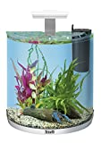 Tetra AquaArt Explorer Line Aquarium Komplett-Set 30 Liter weiß (gewölbteFrontscheibe, langlebige LED-Beleuchtung, ideal für die Haltung von Krebsen) anthrazit, 30 liters