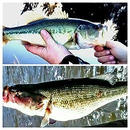 Bass fishing cheat sheet for beginners ebook timothy reed for Bass fishing for beginners