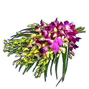 Clare Florist Exciting Exotic Orchid Bouquet - Fresh Flowers with FREE delivery
