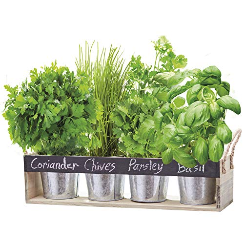 Thompson & Morgan Wooden Herb Chalk Board Gift Set Growing Kit Window Box with Garden Snips & Assorted Seeds