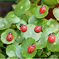 Huertuer Aprox. 50 piezas de miniatura hada jardín mariquitas adorno casa de muñecas planta manualidades
