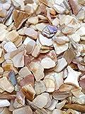 Unbekannt 500g Perlmutt Muscheln Natur Muschelsplitt Granulat Streudeko Hochzeit Kommunion Konfirmation Taufe Weihnachten Tischdeko