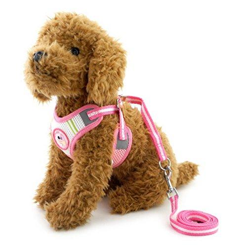 für kleine Hunde Walking Leine Set verstellbar alle Wetter kein Pull Weich gepolsterte Weste Sicherheitsgurt für Welpen Katzen (Fotos De Kein Halloween)