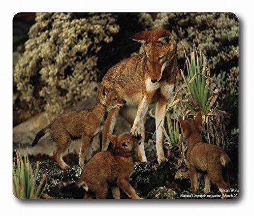 Tiere National Geographic Baby Wolf Personalisierte Stil (01150557) Custom Gaming Mauspad Größe 220mm, länglich * 180mm * 3mm Rechteck Mauspad in 22,9x 17,8cm -