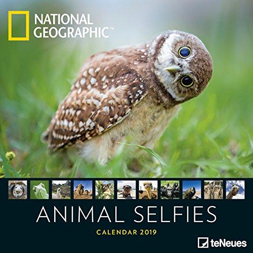 Animal Selfies 2019 - National Geographic Tierkalender, Wandkalender, Fotokalender - 16,5 x 21,6