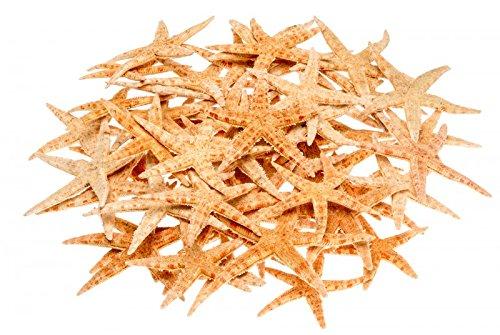 NaDeco Sugar Seestern 8-10cm, 50 Stück | Deko Seestern | Kleine Seesterne | Seesternchen
