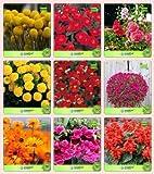 Pinkdose Blumensamen: Pflanzensamen Outdoor-Combo Globosa Gelb, Dianthus-Scarlet Rot, Stockrosen, Marigold-Dhan Basanti, Neme
