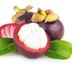 PinkdoseDavitu 50 Teile/paket Mangostan Samen Tropische Saure Süße Frucht Samen Garten Pflanzen Baum Bonsai