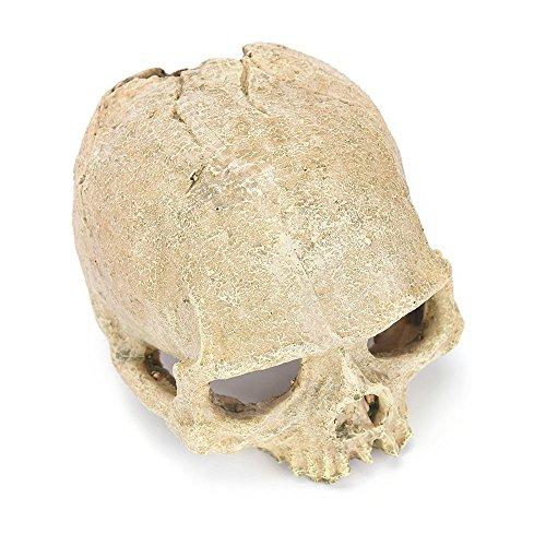 Cinhent Aquarium  Résine Crâne Humain Tête 14cm × 10cm × 11cm pour Aquarium Terrarium Décorations