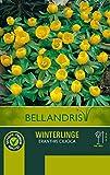 mgc24 Frühjahrsblüher Blumenzwiebeln Sortiment