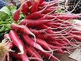 Gemüse - Radieschen - Winter - China Rose - 200 Samen