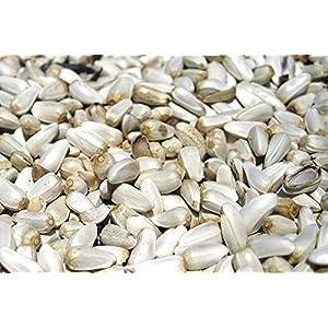 Jd Safflower Seeds / Kusum Beej / Kardi Seed For Birds