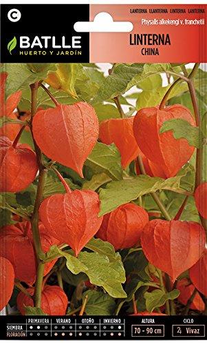 Semillas de Flores - Linterna China - Batlle