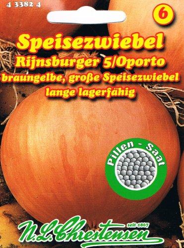 speisezwiebel-rijnsburger-5-oporto-braungelbe-grosse-speisezwiebel